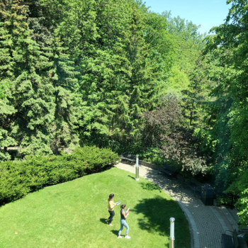 view from above of two people walking through a garden