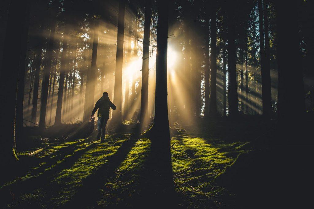 person hiking through forest