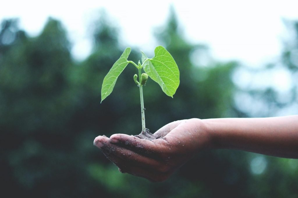 person holding a seedling in their hand